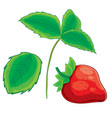 strawberry set from berry leaf and stem cartoon vector image vector image