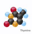 thymine t pyrimidine nucleobase molecule base vector image