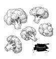 Broccoli hand drawn vector image vector image