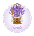 Lavenders basket vector image