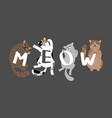 meow slogan with sleeping cats vector image vector image