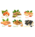 collection of ripe nuts vector image vector image