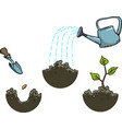 growing a plant vector image vector image