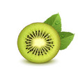 juicy kiwi fruit with green leaves vector image