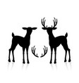 male and female deer vector image vector image