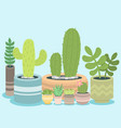 cactus green plant cactaceous home nature cacti vector image