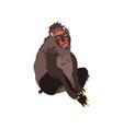 chimpanzee monkey wild exotic african animal vector image