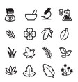 herb icons set vector image vector image