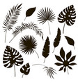 tropical leaves silhouettes black jungle exotic vector image