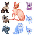 set of cats and kittens of various breeds vector image vector image