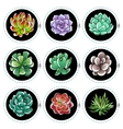 stickers with succulents vector image vector image
