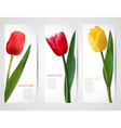 tulip banners vector image