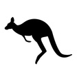 Australia symbol kangaroo vector image vector image