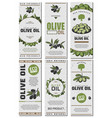 olive oil packaging templates design set vector image