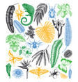 tropical plants and animals collection hand drawn vector image