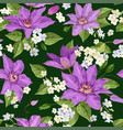 clematis flowers floral tropical seamless pattern vector image