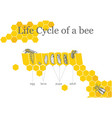 Life cycle of a bee vector image