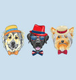 set 3 cartoon hipster dogs vector image vector image