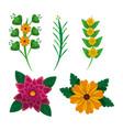 set of floral flowers leaves decoration natural vector image