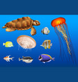 different types of sea animals in ocean vector image vector image
