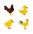 domestic bird icon set flat style vector image vector image