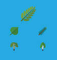 flat icon natural set of spruce leaves leaves vector image