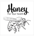 Flying honey bee isolated on white background vector image vector image