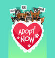 pets for adoption poster vector image vector image