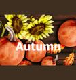 autumn card with pumpkins and sunflower vector image