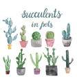 set of cactus and succulents isolated on white vector image vector image