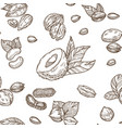 delicious nutritious nuts full of vitamins vector image