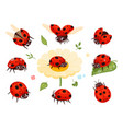 red ladybugs view nature bugs flying summer vector image vector image