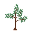 tree plant leaves nature green icon graphic vector image
