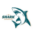 angry shark logo for swimming club perfect to use vector image