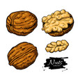 walnut nuts hand drawn vector image