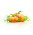ripe pumpkin vegetables vector image vector image