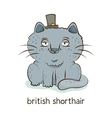 British shorthair Cat character isolated on white vector image vector image