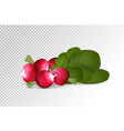 grope of photo realistic radishes with leaf on a vector image