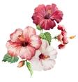 hibiscus2 vector image vector image