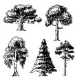 tree sketch hand drawn style types green vector image
