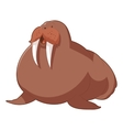 cartoon smiling walrus vector image vector image