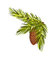 green bushy spruce twig with cone vector image vector image