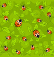 ladybug pattern - colorful pattern of ladybug and vector image vector image