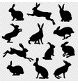 rabbit set isolated transparent background vector image