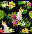 seamless pattern of parrots cockatoo vector image vector image