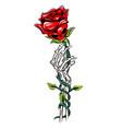 death rose skull with hand bones vector image