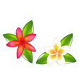 Fragipani With Leaves vector image vector image