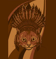 head cat with indian hat vector image vector image