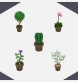 isometric flower set of fern grower peyote and vector image vector image