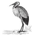 White Stork vintage engraving vector image vector image